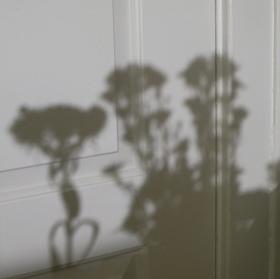 Shadows of flower bouquets cast on a white door.