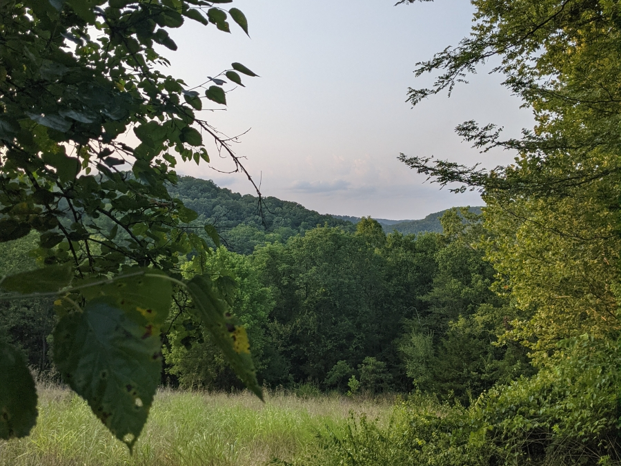 A view of the woods and hills in Eureka Springs, Arkansas. Lush green leaves frame the photo and there is a rolling field of grass, which ends in tall green trees.
